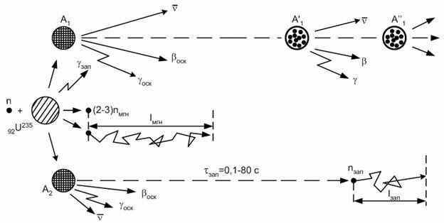Схема деления ядра урана.